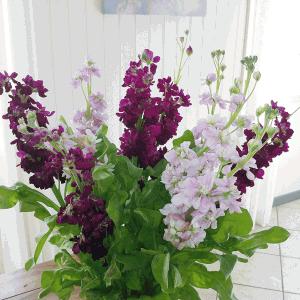 blommor-300x300