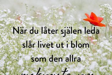 När du låter själen leda, slår livet ut i blom, som den allra vackraste ros